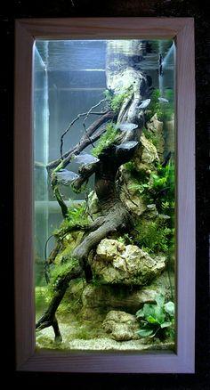 Bar Aquarium, Aquarium Terrarium, Nature Aquarium, Aquarium Design, Aquarium Fish Tank, Fish Tanks, Aquarium Aquascape, Vivarium, Paludarium