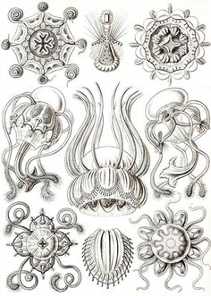 Ernst Haeckel , A world traveler, this biologist, naturalist, and philosopher
