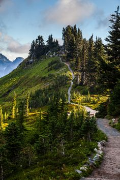 outdoormagic:  nordvarg: Alta Vista Trail, Mt. Rainier \ Tommy Farnsworth