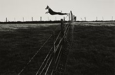 Leaping lurcher by Fay Godwin - British Library Prints Black And White Dog, Black And White Landscape, Lurcher, Wild Dogs, British Library, Landscape Photographers, Belle Photo, Black And White Photography, Female Art