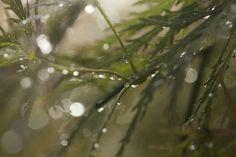 Janice Parker Landscape Architects, established in is a premier landscape architecture firm servicing New York City, the Hamptons and Connecticut. Kips Bay Showhouse, Landscape Architecture, The Hamptons, Plants, Plant, Planets, Landscape Design, Landscape Art