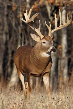 Monster Of A Buck