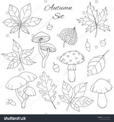 Bullet Journal Outline, Bullet Journal Ideas Pages, Bullet Journal Inspiration, Embroidery Leaf, Hand Embroidery Videos, Leaf Drawing, Floral Drawing, Chalk Drawings, Art Drawings