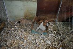 77 dogs rescued from Sutter County backyard breeder