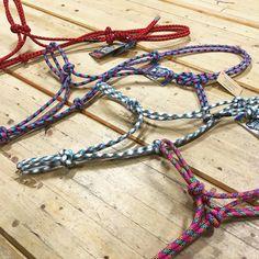 Venez choisir votre licou de corde parmi les dizaines de couleurs disponibles. Bikinis, Swimwear, Thong Bikini, Fashion, Cord, Colors, Bathing Suits, Moda, Swimsuits