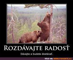 Brown Bear, True Stories, Geek Stuff, Humor, Funny, Animals, Geek Things, Animales, Humour