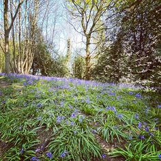 #bluebells Plants, Instagram, Plant, Planets