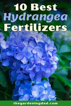 Hydrangea Fertilizer, Pruning Hydrangeas, Types Of Hydrangeas, Hydrangea Varieties, Hydrangea Landscaping, Planting Flowers, Lawn Fertilizer, Growing Flowers, Hortensia Hydrangea