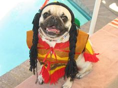 top 15 pug halloween costumes what the pug httpwhatthepug - Pugs Halloween Costumes