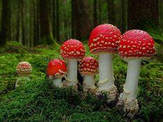 Paddestoelen zoeken in het bos, en kaboutertjes....