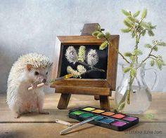 La vie secrète des hérissons par Elena Eremina  2Tout2Rien