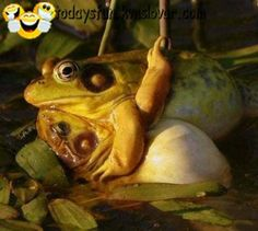 fullfun - frog love - TodaysFun ... Worlds best funny pictures collection
