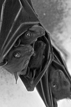 Ew, these bats look like Callie!!!
