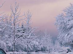 verschneites Reykjavik, snowy Reykjavik, Island im Winter, Iceland in winter, Schnee Bilder, goldener Himmel, winterliche Fotos, verschneite Landschaft, auswandern nach Island, moving to Iceland, Blog auswandern, Travel Blog, Reise Blog, Like A Riot
