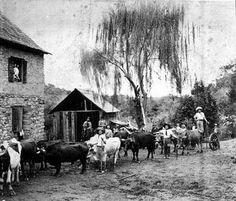 blogAuriMartini: Imigração Italiana para o  Rio Grande do Sul - 187...