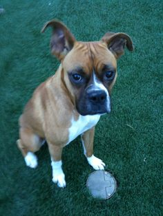 27 Best Adoptable Dogs in Lubbock Texas images in 2012