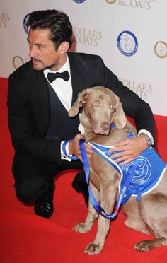 David even met his match with this posing dog. | There Was A Ball For Celebrities And Dogs In Battersea And It Was The Best
