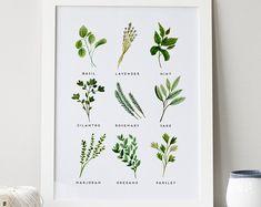 Herbes impression · 4 x 6 5 x 7 8 x 10 11 x 14 · Impression d'Art de cuisine · Aquarelle d'herbes · Basilic, origan, sauge, coriandre Art · Art botanique · Décor de cuisine
