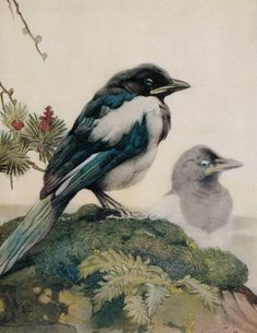 Maurice & Edward Detmold Print Wildlife Birds Baby Bird Magpie Young Magpies