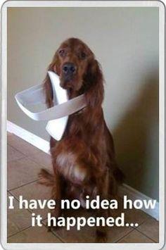 Novelty Fridge Magnet Naughty Dog Red Setter Dog bin lid on head fun saying | eBay
