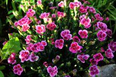 From my garden :-) Garden, Nature, Plants, Garten, Naturaleza, Gardening, Plant, Outdoor, Natural