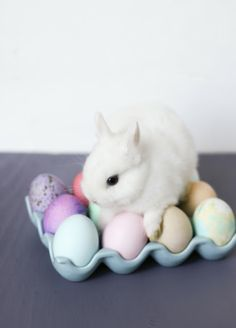 Easter Eggs & A Baby Bunny