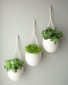 How To Grow Herbs Indoors On Small White Pot