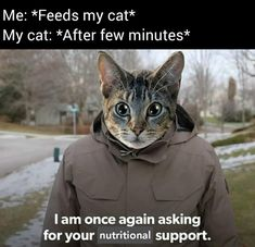 "Thirty-Six Purr-Worthy Cat Memes For The Cat Parents - Funny memes that ""GET IT"" and want you to too. Get the latest funniest memes and keep up what is going on in the meme-o-sphere. Funny Cat Memes, Stupid Memes, Funny Relatable Memes, Stupid Funny, Funny Dogs, Funny Stuff, Funny Things, Hilarious Sayings, Fuuny Memes"