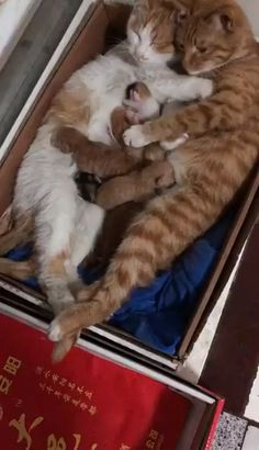 Happy Cat Family Kittens most cute kittens Cute Funny Animals, Cute Baby Animals, Funny Cute, Animals And Pets, Animals Images, Cute Cats And Kittens, Kittens Cutest, Funny Kittens, Grumpy Cats