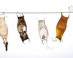 Exhibition | Contemporary Glass Society Andrea Spencer