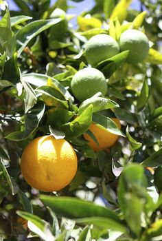 fruit tree tips