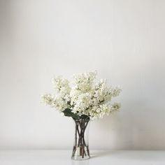 ARRANGEMENT:   White Lilacs with De-Leafed Stems + Cylinder Glass Vase.