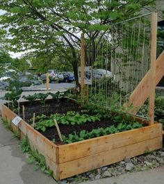 Pea trellis: with wood, electrical conduit pipe,and twine