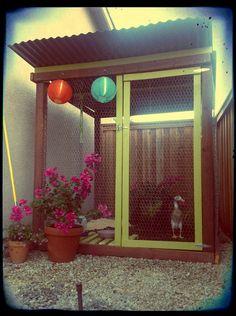 Chicken coop, duck house, indian duck runners