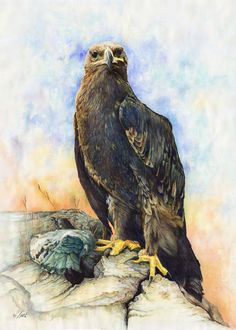 Eagle painted by Ali Naseri size: Eagle Painting, Watercolour Painting, Bald Eagle, Ali, Bird, Animals, Instagram, Psicologia, Animales