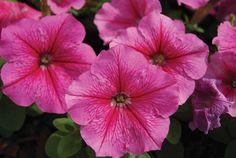 valentine flowers nairobi