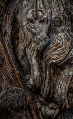 "Bark texture can be used in lieu of solid brown to soften the look and support the recognition and significance of the logo. ___ musicofthedawn: "" coffeenuts: "" mererecorder:Wood Spirit by "" ♣ ♧ beyond the edge ♤ ♠ "" Wood Texture, Texture Design, Natural Texture, Wood Patterns, Patterns In Nature, Textures Patterns, Texture Photography, Macro Photography, Photography Ideas"