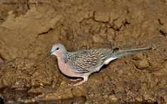 How to Photograph Birds in India-Part III - Indian Wildlife Club Ezine - March, 2013