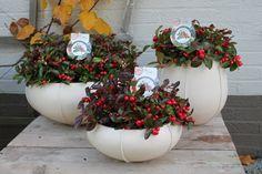 Gaultheria procumbens Capi Planter Pots, Pearl, Decorations, Garden, Home Decor, Garten, Decoration Home, Bead, Room Decor