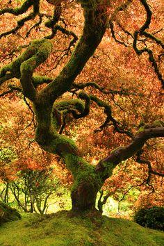 Oregon Japanese Garden- Fall Tree Photo