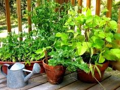 How to Grow Vegetables in Pots and Containers - Tips, Guides, Facts - - Including pot capacities, potting soil recipes, container sizes for various vegetables