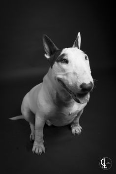 Bull Terrier by Lill G on 500px
