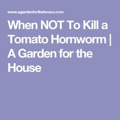 When NOT To Kill a Tomato Hornworm | A Garden for the House