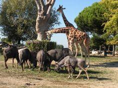 "#Safari #park ""Parco Natura Viva"" Više na - > http://www.birikina.hr/zabavni-parkovi/312-gardaland-safari-park-natura-viva.html"