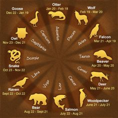 Daily Horoscope Taureau- 12 Native American Astrological Signs and Their Meaning. - - Daily Horoscope Taureau- 12 Native American Astrological Signs and Their Meanings Native American Astrology, Native American Wisdom, American Indians, Native American Animals, Native American Spirituality, Native American Cherokee, Native American Tattoos, American Art, Astrology Zodiac
