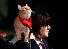 London, UKBob the cat poses with his owner James Bowen as they arrive for the world premiere of A Street Cat Named Bob at The Curzon Mayfair