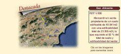 V830 Sax. Alicante  Sociedad y suelo edificable en venta.