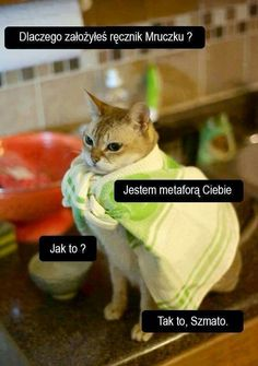 No tu strzępić ryja? Memes Humor, Man Humor, Wtf Funny, Funny Jokes, Hilarious, Happy Photos, Funny Photos, Polish Memes, Funny Mems