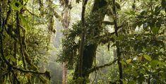 place-cloudforest01.jpg (960×486)