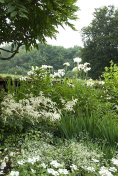 Iris ensata 'Great White Heron', Astilbe, Euphorbia 'Diamond Frost', Echinacea…